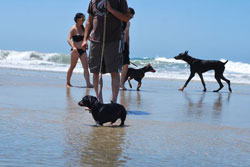 dog park in huntington beach, california
