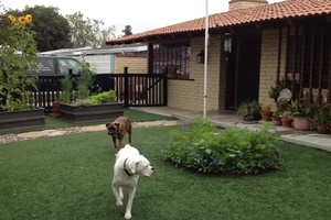 doggy daycare in newport beach