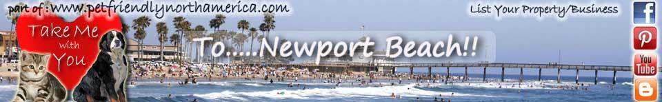 Cat Boarding Newport Beach Ca
